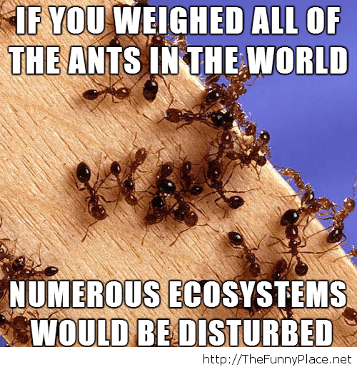 Funny ant fact