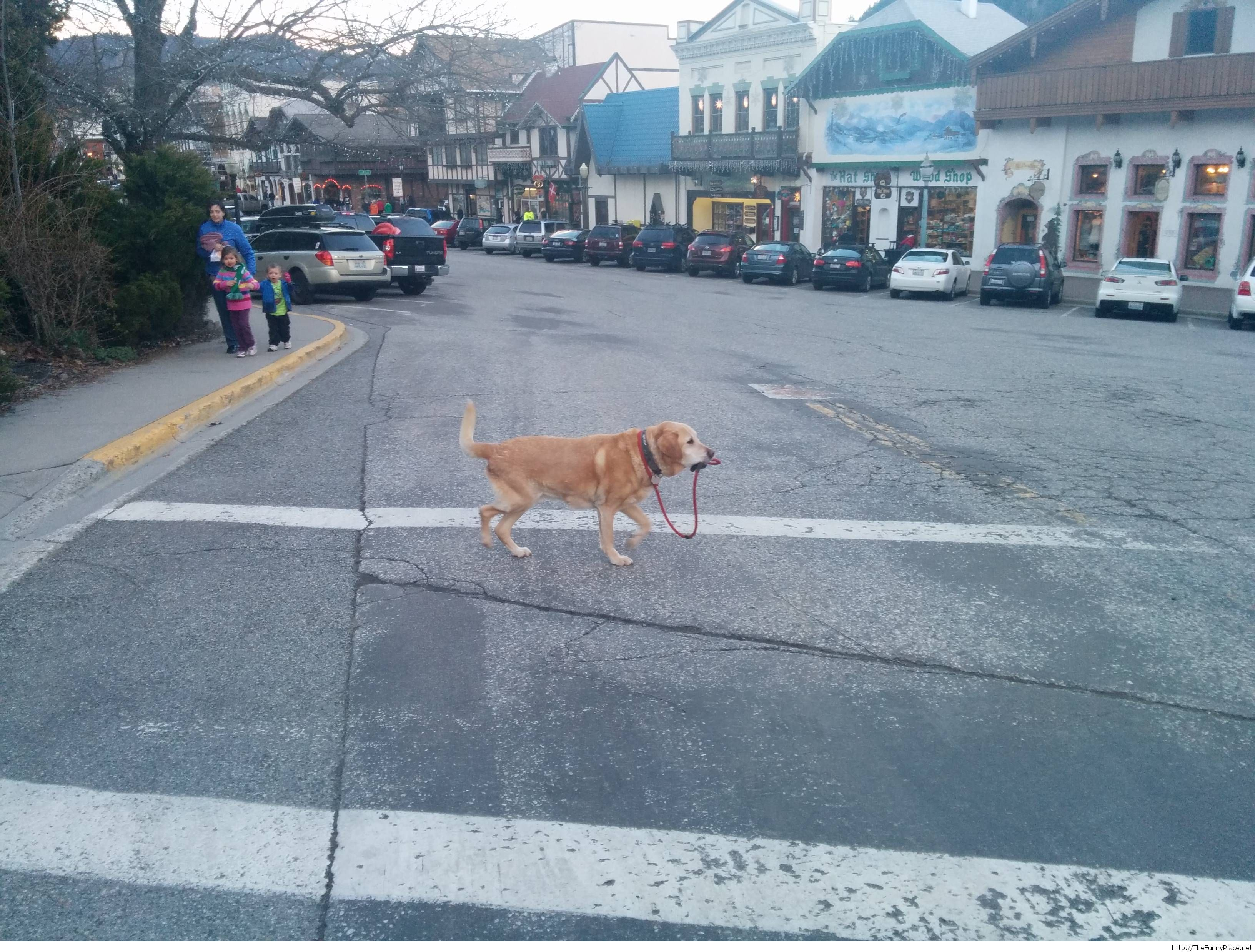 He takes himself to a walk, no need for humans here...