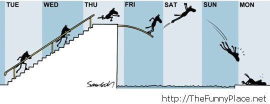 How my week looks like
