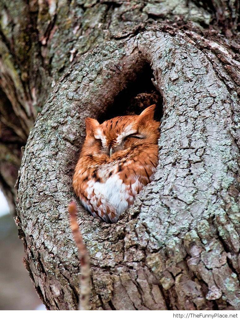 Content little owl