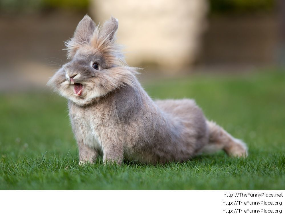 Excited Easter Bunny