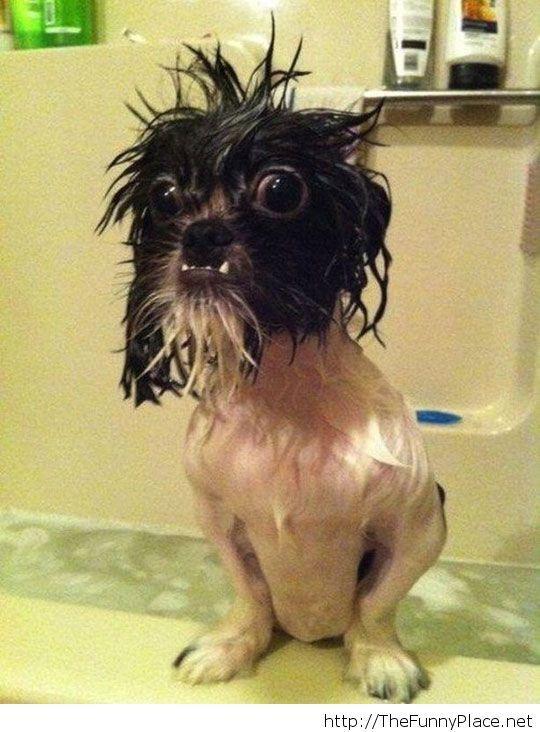 He looks kind of creepy after a bath
