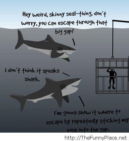 Misunderstood creatures