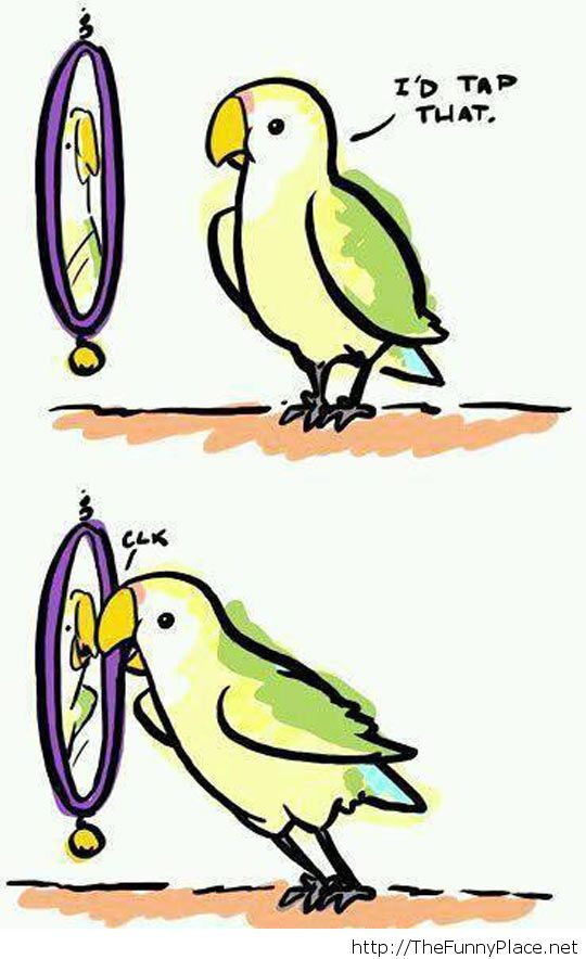 Narcissistic bird