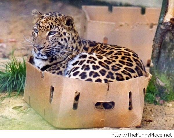 Of course you can have that box
