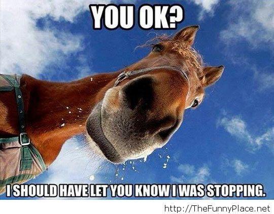 Scumbag horse