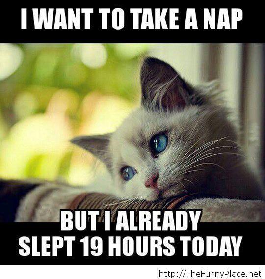 First World Kitten Problems