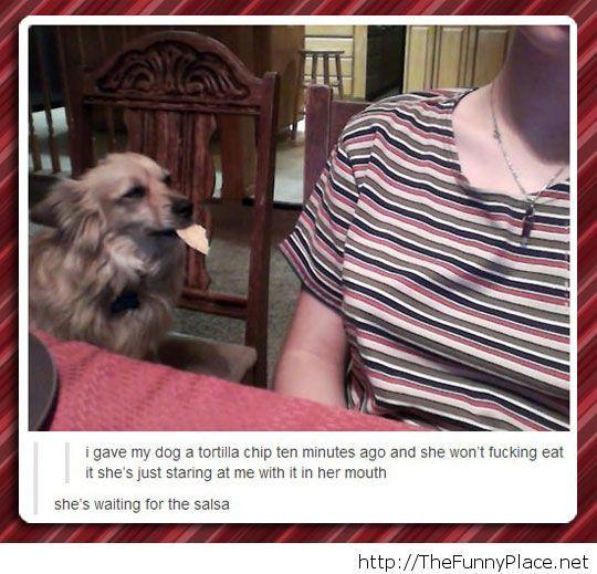 Funny dog eating