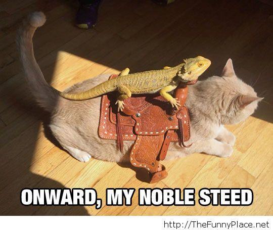 Onward, Cat!