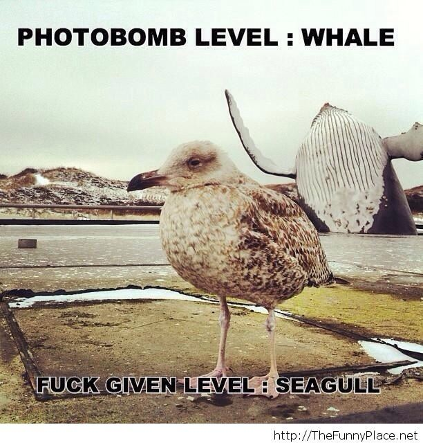 Photobombed by a whale