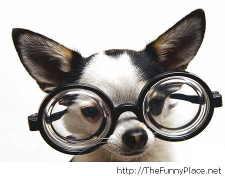 Dog with glasses funny