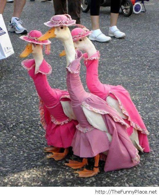 Funny duck dresses