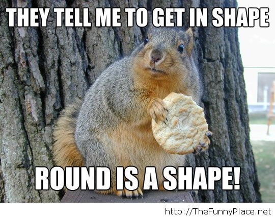 Funny fitness squirrel