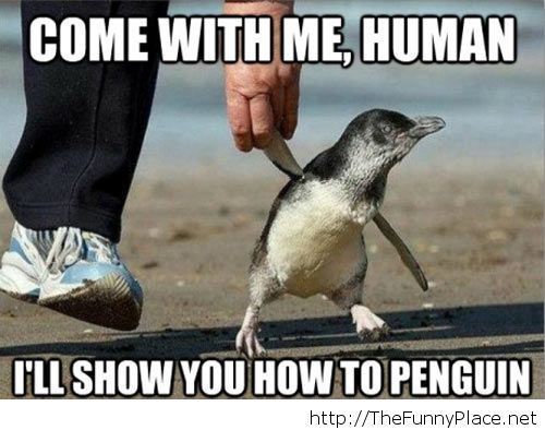 Let me show you the penguin way…