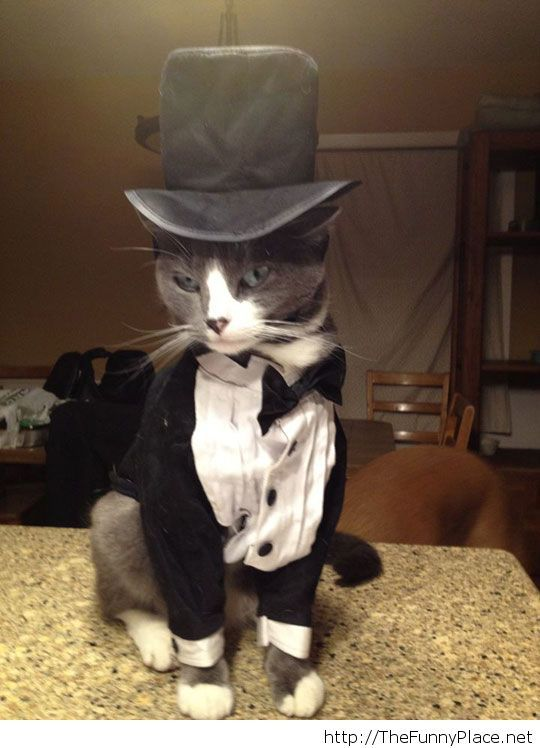 Stylish cat