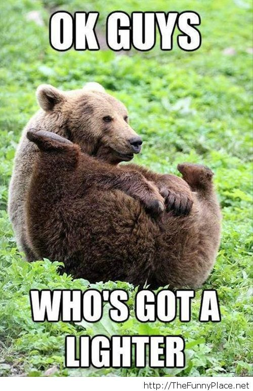 A bear asking for a lighter