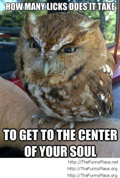Baby owl funny picture