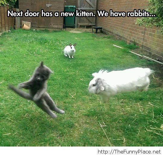 Crazy little neighbours