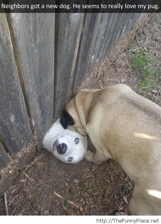 Friendly neighbour dog