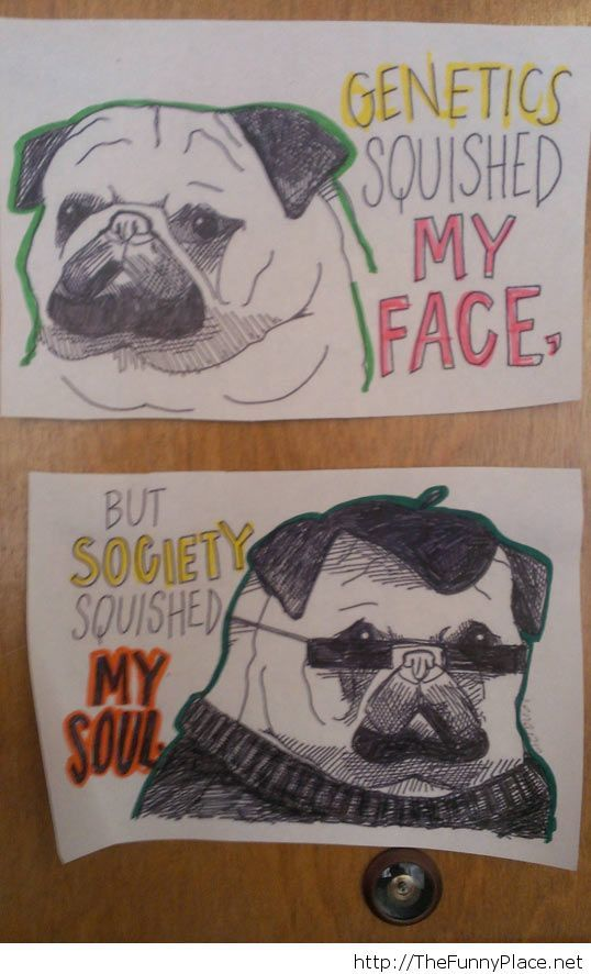 Funny pug soul quote