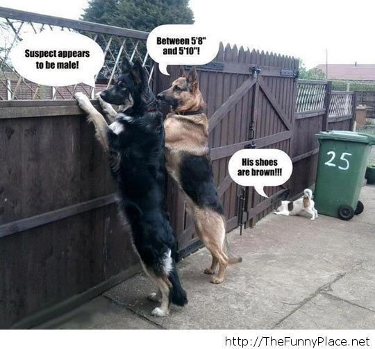 Funny team work dogs