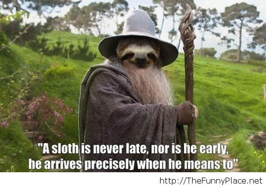 Gandalf sloth picture