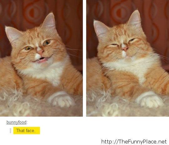 Hilarious cat face