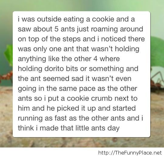 Making an ant feel good