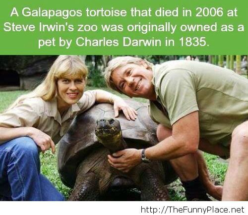 Old turtle Steve Irwin