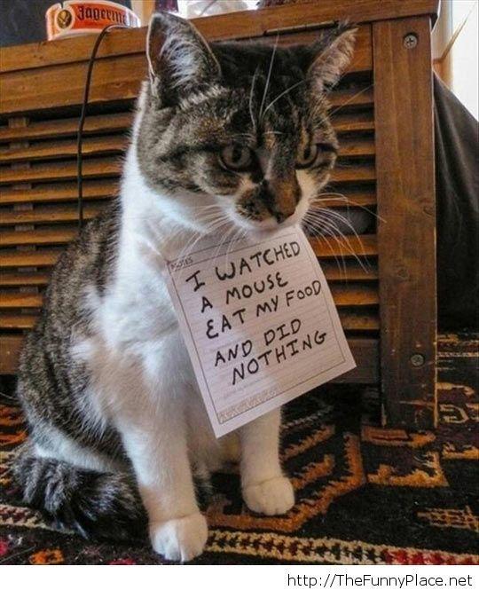 Passive cat