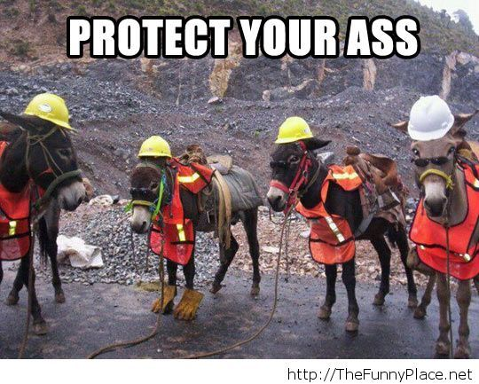 Protect your donkey…