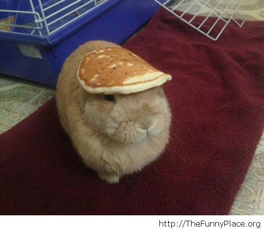 A bunny with a hat
