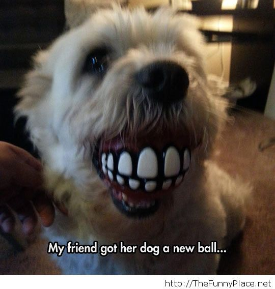 Funny ball for your dog