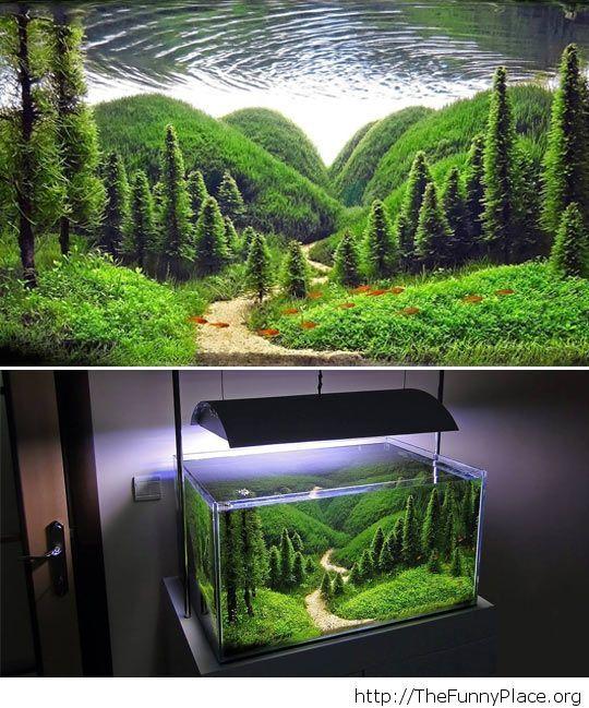 Its an aquarium Funny