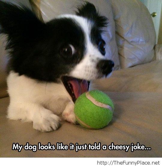 Now laugh, human!