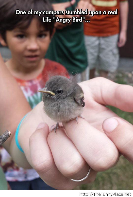Real life 'Angry Bird'