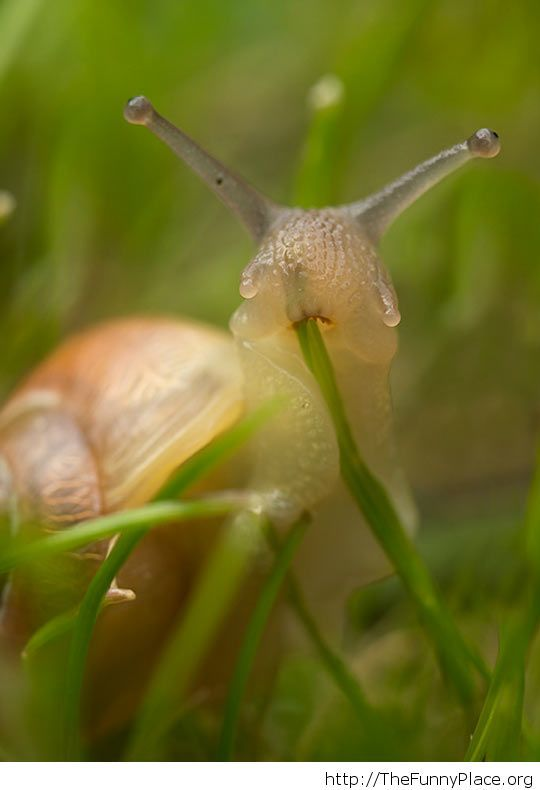 The Photographer Interrupted This Snail While He Was Chowing Down On A Blade Of Grass
