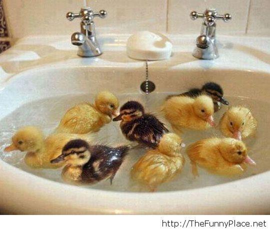 Their first bath