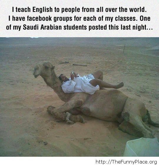 Chilling On My Camel