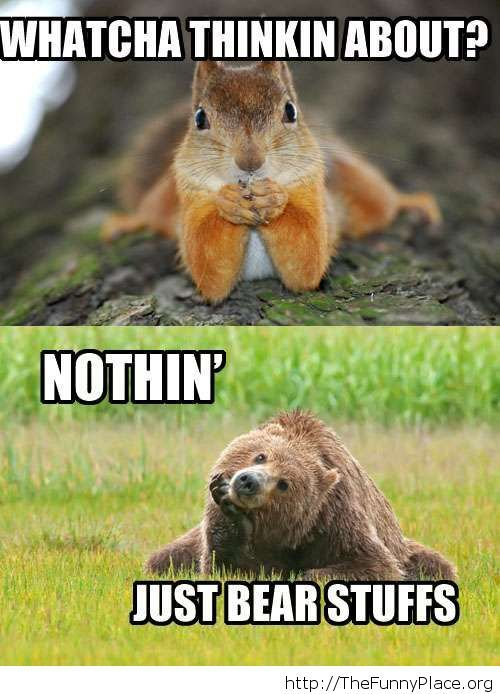 Funny bear meme time