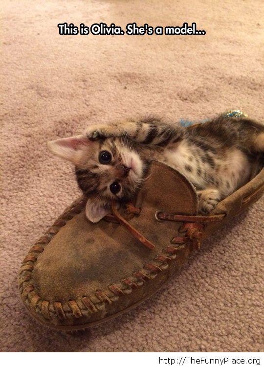 Funny little kitty