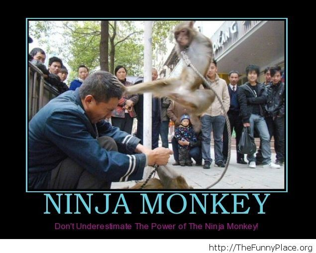 Funny ninja monkey