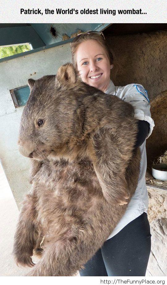 Gigantic Hamster