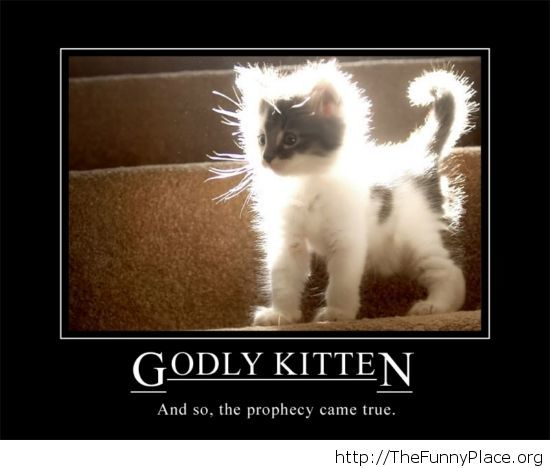 Godly kitten picture