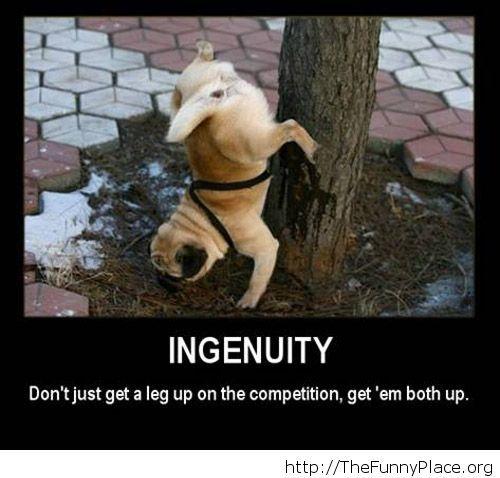 Ingenuity, funny dog