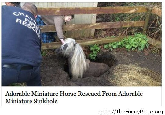 Miniature Horse Rescue awesome