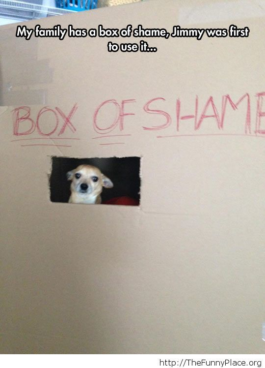 The box of shame Funny