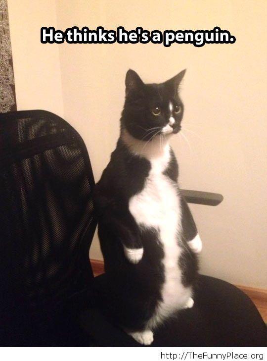 The penguin cat