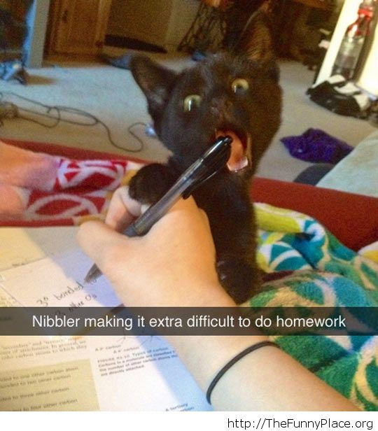 There will be no homework done