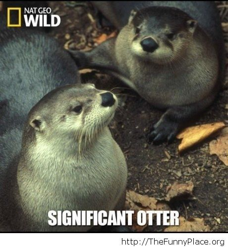 Two thumbs to the people over at nat geo wild, funny